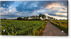 Acrylic Print featuring the photograph Evening In A Cornfield by Dmytro Korol