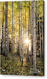 Evening In An Aspen Woods Vertical Acrylic Print