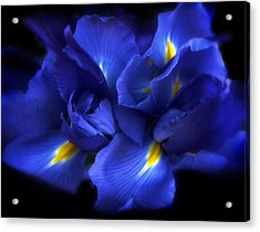 Evening Iris Acrylic Print by Jessica Jenney