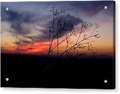 Evening Light Over Meadow Acrylic Print