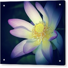 Acrylic Print featuring the photograph Evening Lotus  by Julie Palencia