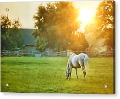 Evening Mist Acrylic Print by JAMART Photography