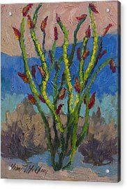 Evening Ocotillo Acrylic Print by Diane McClary