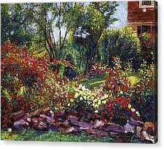 Evening Roses Acrylic Print by David Lloyd Glover