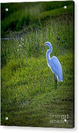 Evening Search Acrylic Print by Marvin Spates