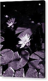 Evening Sun Light Acrylic Print by Susanne Van Hulst