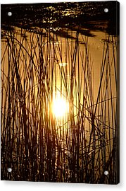 Evening Sunset Over Water Acrylic Print