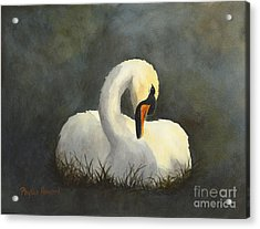 Evening Swan Acrylic Print by Phyllis Howard