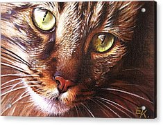 Evening Tabby Acrylic Print by Elena Kolotusha