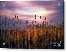 Evening's Candles Acrylic Print