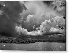 Everglades 0257bw Acrylic Print