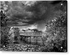 Everglades 0823bw Acrylic Print