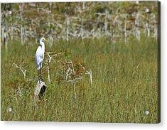 Everglades 451 Acrylic Print