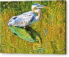 Everglades Blue Heron Acrylic Print by Dennis Cox