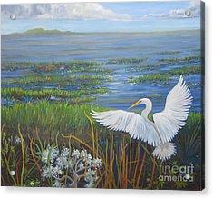 Everglades Egret Acrylic Print