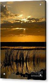 Everglades Evening Acrylic Print by David Lee Thompson