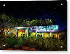 Everglades Gatorland Acrylic Print