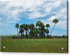 Everglades Landscape Acrylic Print