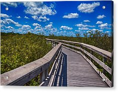 Everglades Trail Acrylic Print by Swank Photography