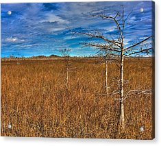 Everglades Acrylic Print by William Wetmore