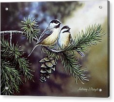 Evergreen Chickadees Acrylic Print