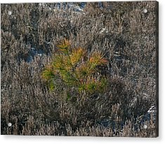 Evergreen  Acrylic Print by Juergen Roth