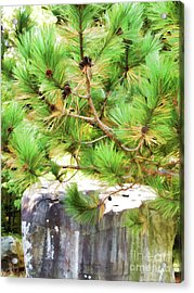 Evergreen Tree Branches With Cones Acrylic Print by Lanjee Chee