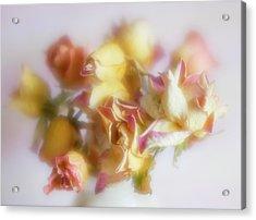 Everlasting Rose Buds Acrylic Print