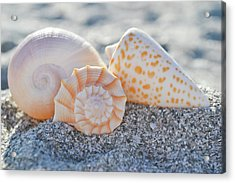 Acrylic Print featuring the photograph Every Shell Has A Story by Melanie Moraga