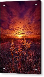 Acrylic Print featuring the photograph Every Sound Returns To Silence by Phil Koch