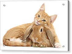 Everybody Needs A Bunny For A Pillow Acrylic Print