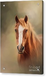 Everyone's Favourite Pony Acrylic Print by Michelle Wrighton