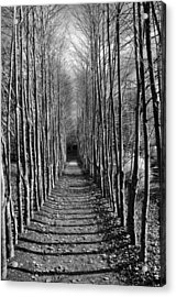 Everyone's Journey Is Individual Acrylic Print