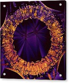 Eviternity Acrylic Print by Susan Maxwell Schmidt