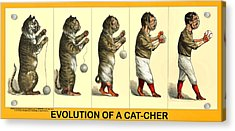 Evolution Of A Cat-cher Acrylic Print