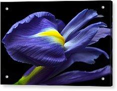 Evolving Iris. Acrylic Print