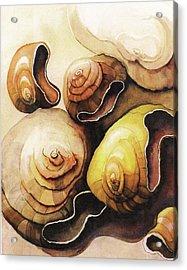 Evolving Shells Acrylic Print by Lynda Lehmann