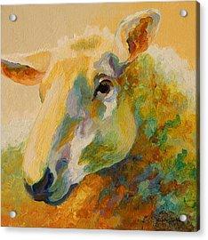 Ewe Portrait IIi Acrylic Print