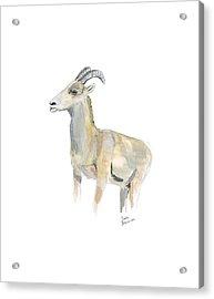 Ewe Acrylic Print
