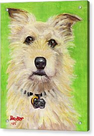 Example Of Pet Portrait Acrylic Print by Sheila Kinsey