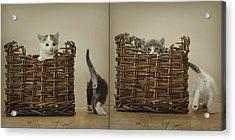 Exchange Acrylic Print by Inesa Kayuta