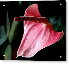 Excited Flower Acrylic Print by Steven Milner