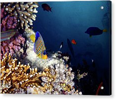 Exciting Red Sea World Acrylic Print