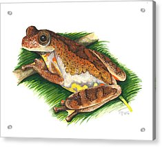 Executioner Treefrog Acrylic Print