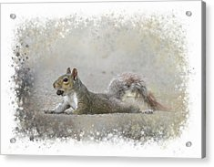 Exhausted Squirrel Acrylic Print