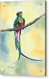 Exotic Bird Acrylic Print