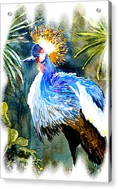 Exotic Bird Acrylic Print by Steven Ponsford