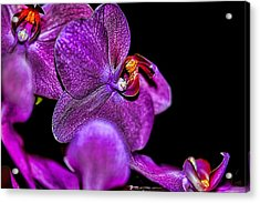 Acrylic Print featuring the photograph Exotic by Diana Mary Sharpton
