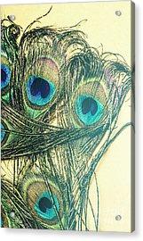 Exotic Eye Of The Peacock Acrylic Print