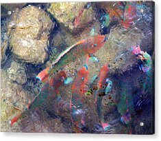 Exotic Fish Acrylic Print by Rose  Hill